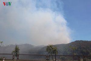 Xác minh thông tin việc bắt giữ đối tượng gây cháy rừng