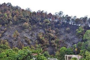 MC Phan Anh xin lỗi sau khi nhận 'gạch đá' vì khóc thương nhà thờ Đức Bà, còn cháy rừng ở Việt Nam lại thờ ơ