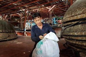 Trung Quốc thay đổi phương thức nhập khẩu, 930 tấn mực khô của ngư dân Quảng Nam tồn kho