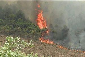 Quảng Bình: Cháy rừng thiêu rụi 5 ha thông và keo