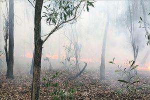 Dập tắt vụ cháy rừng trồng nguyên liệu ở Quảng Nam