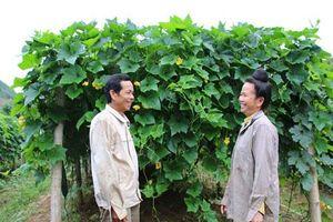 Sơn La: Hoàn lương thành triệu phú của vợ chồng từng buôn 'cái chết trắng'