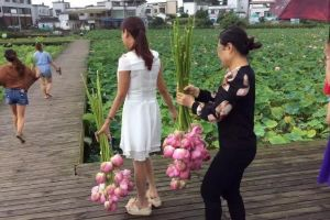 Bị dân hái trộm gần hết hoa sen, công viên TQ buộc phải đóng cửa