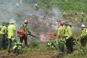 Tăng cường công tác phòng cháy, chữa cháy rừng trong điều kiện thời tiết nắng nóng kéo dài