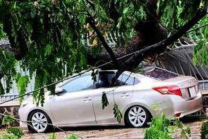 Cây lớn đổ đè móp ôtô con trong mưa lớn ở Sài Gòn