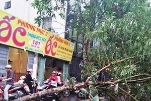 Hà Nội: Cây xanh đổ bất ngờ, một người bị thương