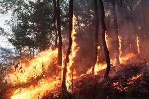 Hơn một tháng, Nghệ An xảy ra 11 vụ cháy rừng, thiệt hại hơn 53 ha
