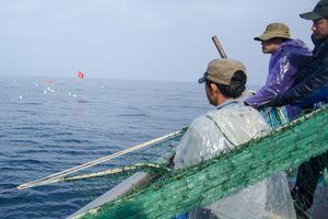Neo tàu trên vùng nước cạn ở quần đảo Hoàng Sa để trụ bão và bám đảo