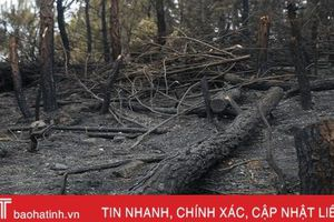 Cháy rừng ở Đức Thọ gây thiệt hại 6,5ha