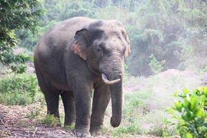 Đồng Nai: Trồng rừng tạo thêm sinh cảnh cho đàn voi