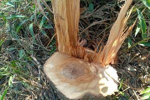 Đắk Nông: Tăng cường tổ chức ngăn chặn, xử lý tình trạng phá rừng