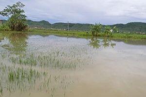 Rơi xuống ruộng ngập nước sau mưa, bé gái 22 tháng tuổi tử vong