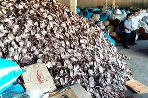 Quảng Ngãi: Xã biển tồn đọng hàng nghìn tấn mực khô