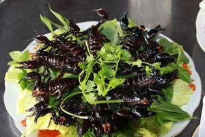 'Tái mặt' với món bò cạp Bảy Núi ở An Giang vừa ăn vừa run