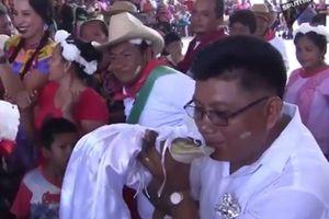 Kỳ lạ cá sấu mặc váy cưới trắng muốt, kết hôn với người