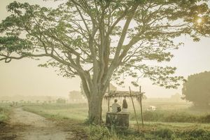 Phim Việt chinh phục đỉnh mới
