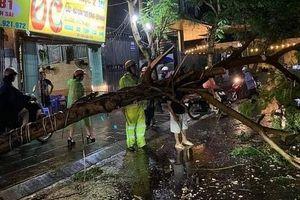 Hà Nội: Cây xanh bất ngờ gãy đổ, đè trúng 2 người phụ nữ đi xe máy