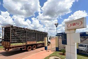 Anh trả lại 1.400 tấn gia cầm cho Brazil do nhiễm khuẩn salmonella