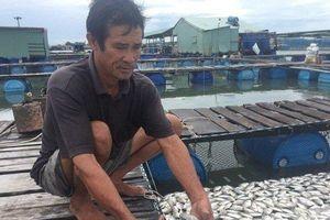 Bà Rịa - Vũng Tàu: Cá chết hàng loạt trên sông Chà Và, người dân đối diện nguy cơ trắng tay