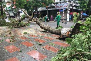 Nhiều cây xanh ở Hải Phòng bật gốc, gãy đổ sau cơn bão số 2