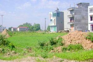 Nhiều địa phương muốn 'tự quyết' việc chuyển đổi đất lúa trên 10ha