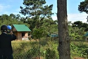 Kiên quyết cưỡng chế, thu hồi đất lấn chiếm Vườn Quốc gia Bidoup - Núi Bà