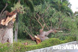 Bão số 2 quần thảo Đồ Sơn, quật đổ hàng loạt cây xanh ở Hải Phòng