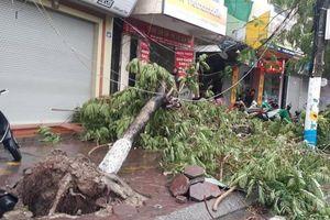 Hải Phòng: Sau bão, cây lật gốc, gãy la liệt trên đường