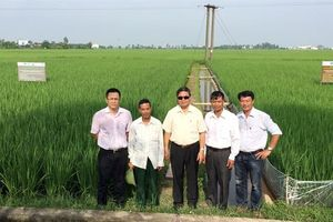 Bón phân thông minh giảm phát thải khí nhà kính trong canh tác lúa