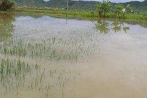 Ngã xuống ruộng lúa ngập nước, bé 22 tháng tuổi tử vong
