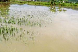 Nghệ An: Sảy chân xuống ruộng ngập nước, một cháu bé tử vong