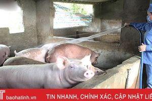 Chăn nuôi an toàn sinh học: 'Lá chắn thép' trước 'bão' dịch ở Hà Tĩnh