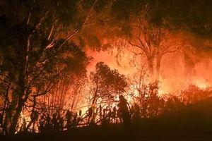 Đừng cháy nữa, rừng ơi!
