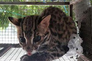Giải cứu thành công 46 động vật hoang dã