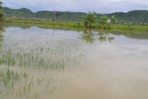 Ngã xuống ruộng lúa, bé 22 tháng tuổi tử vong thương tâm tại Nghệ An