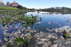 Đà Nẵng: Cá chết nổi trắng, bốc mùi hôi nồng nặc tại hồ điều tiết Trung Nghĩa