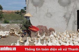 Huyện Nông Cống: 97 hộ dân thực hiện chuyển đổi con nuôi