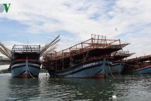 Ngư dân Quảng Ngãi lao đao vì không ai mua mực khô