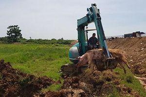 Hà Nội cấp bổ sung 218 tấn hóa chất, khử trùng dịch tả lợn châu Phi