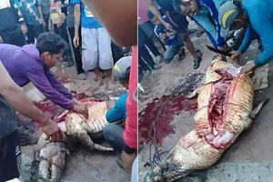 Cá sấu ăn thịt người bị tóm, rạch bụng càng kinh hãi...