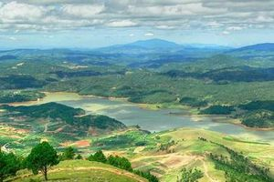 Lâm Đồng: Trồng 1.000 cây mai anh đào trên núi Lang Biang