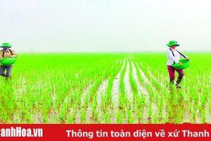Cơ bản hoàn thành gieo cấy lúa thu mùa