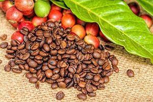 USDA dự báo sản lượng cà phê của Việt Nam niên vụ 2019/2020 đạt mức kỷ lục