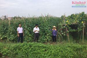 Chủ nhân cánh đồng lớn 20ha rau sạch ở Việt Đoàn