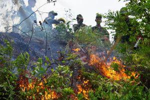 Đà Nẵng: Cháy lớn thiêu rụi 5.000m2 rừng keo lá tràm
