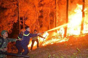 Đau thương rừng cháy...