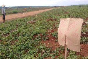 Họp báo 'nóng' vụ chiếm 209,8 ha đất trồng cao su