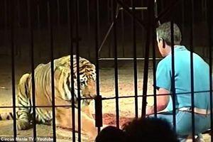 Nghệ sĩ xiếc thú chết thương tâm vì bị đàn hổ tấn công