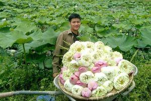 Nam cử nhân Báo chí cất bằng về quê làm nông nghiệp sạch hữu cơ