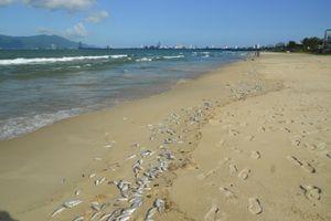 Biển Nam Trung Bộ: Nguồn tài nguyên đang bị khai thác quá mức